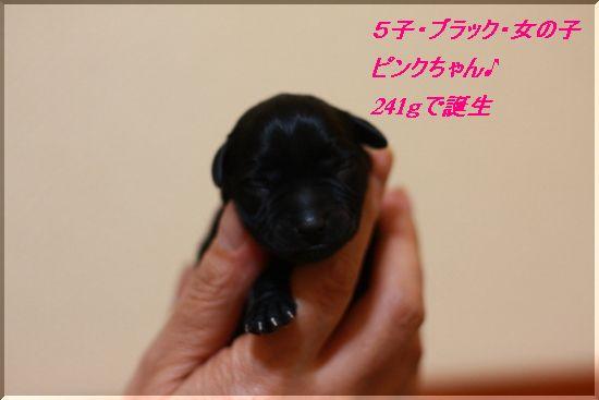 ピンクちゃん(スワロの子)
