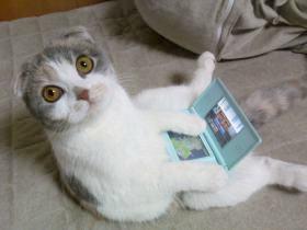 cat08012922005.jpg