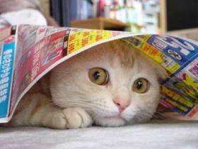 cat08013111069.jpg