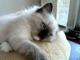 cat08013112086.jpg
