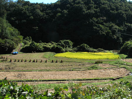 秋の田んぼ