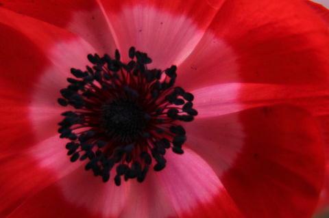 anemone2-x.jpg
