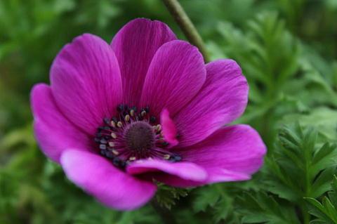 anemone7-x.jpg