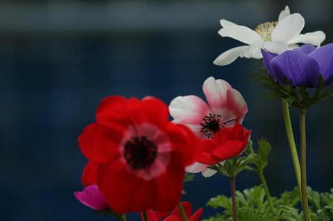anemoness-x_20120324222338.jpg