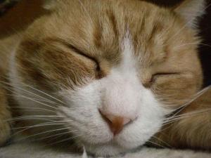 ②寝顔ココ