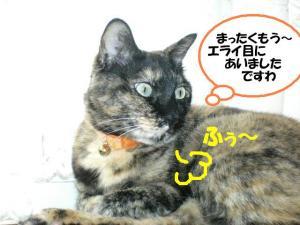 ①エライ目ビッケ
