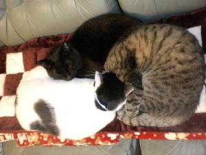 ①猫団子1