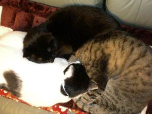 ①猫団子2
