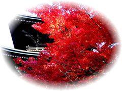 yamakosi1112-240.jpg