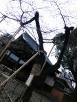 120401_tokyosakurahyohon.jpg