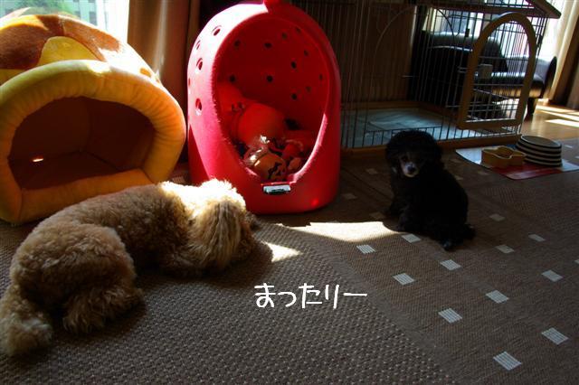 2008.5.21ヴィッケ&ロッタ 023 (Small)
