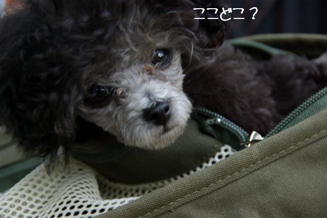2008.5.22航空公園 009 (Small)