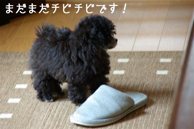 2008.5.28最近のヴィッケとロッタ 008 (Small)