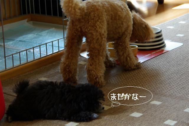 2008.5.28最近のヴィッケとロッタ 013 (Small)