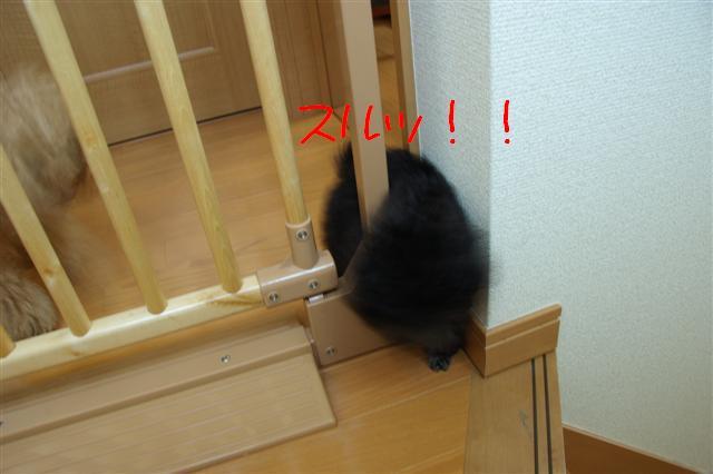 2008.5.31ゲート脱出! 002 (Small)