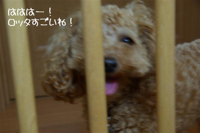 2008.5.31ゲート脱出! 008 (Small)