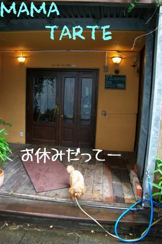 2008.6.9ロッタ初トリミング 001 (Small)