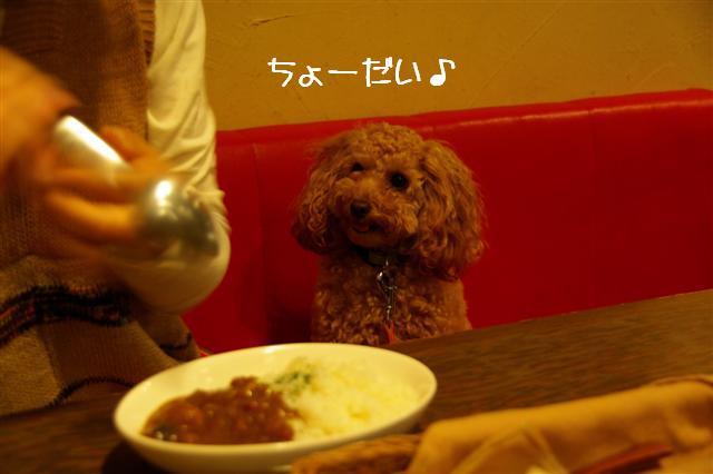 2008.6.9ロッタ初トリミング 002 (Small)