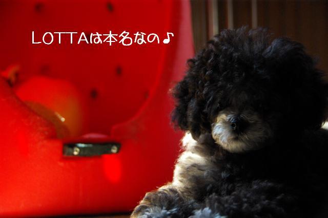 2008.6.12ロッタ血統書 036 (Small)