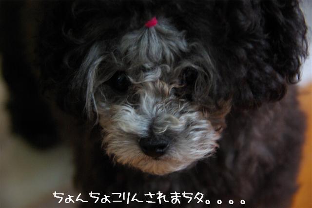 2008.6.24ロッタちょんまげ 008 (Small)