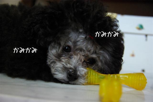 2008.6.24ロッタちょんまげ 016 (Small)