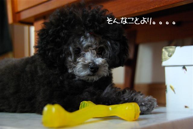 2008.6.24ロッタちょんまげ 018 (Small)