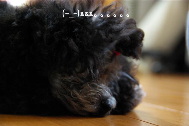 2008.6.24ロッタちょんまげ 019 (Small)