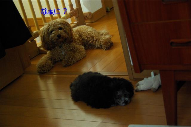 2008.6.24ロッタちょんまげ 045 (Small)