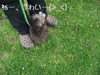 2008.7.1お散歩 011