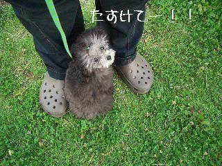 2008.7.1お散歩 014
