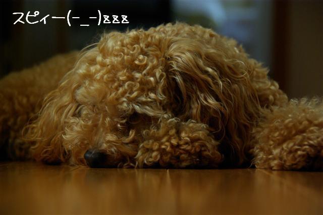2008.7.3お昼寝 094 (Small)