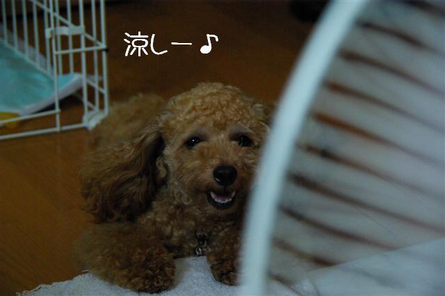 2008.7.15扇風機とヴィッケ 014 (Small)