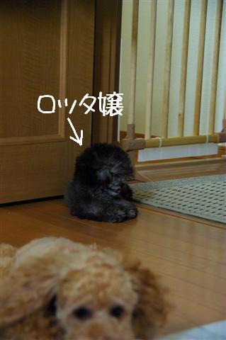 2008.7.15扇風機とヴィッケ 009 (Small)
