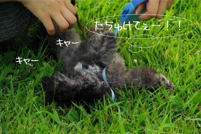 2008.7.21航空公園夕涼み 190 (Small)