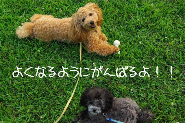 2008.7.21航空公園夕涼み 207 (Small)