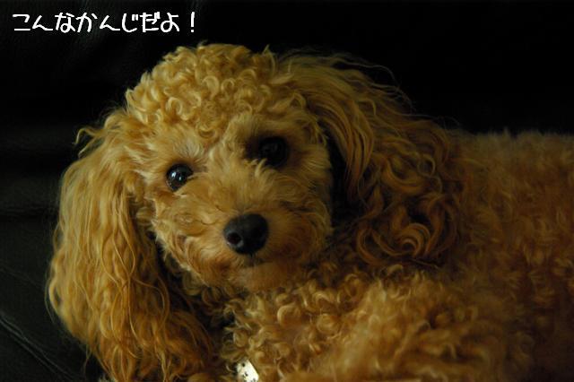 2008.8.3屈伸運動 038 (Small)