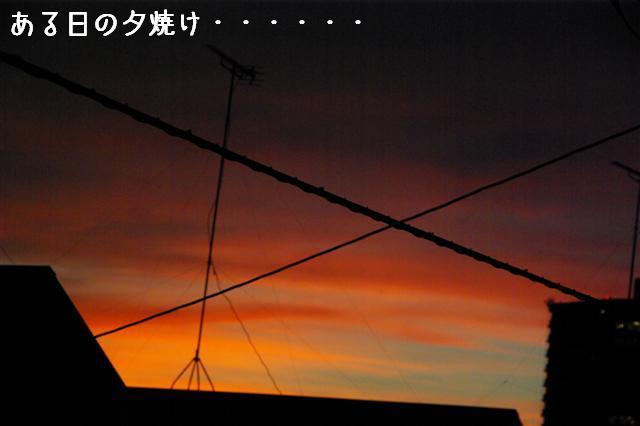 2008.8.3屈伸運動 004 (Small)