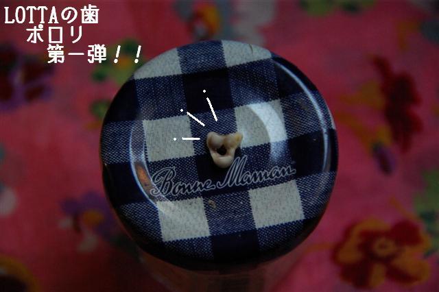 2008.8.8ロッタ歯抜け1号 041 (Small)