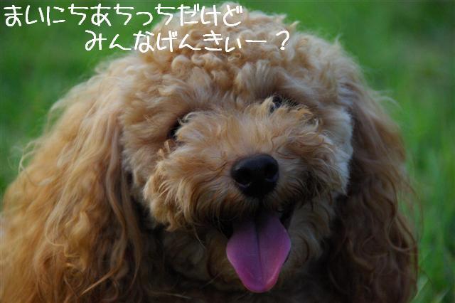 2008.8.8ロッタ歯抜け1号 001 (Small)