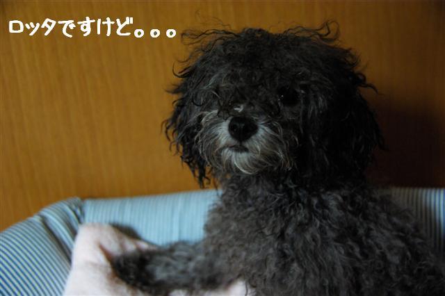 2008.8.9ココシャン&プレゼント 026 (Small)