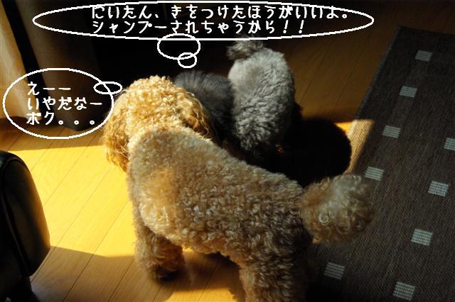 2008.8.9ココシャン&プレゼント 046 (Small)