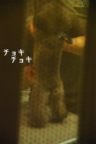 2008.8.14トリミング+カート 082 (Small)