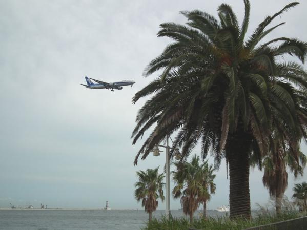 城南島海浜公園 椰子の木が植えられていました