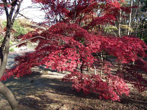 横浜 三ッ池公園の紅葉(1)