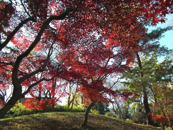 横浜 三ッ池公園の紅葉(2)