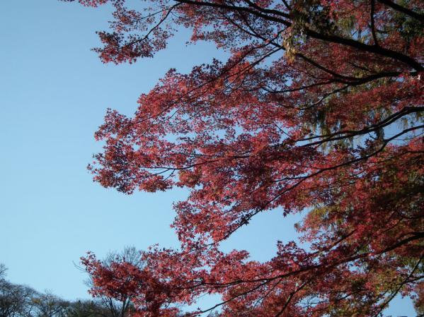 横浜 三ッ池公園の紅葉(3)