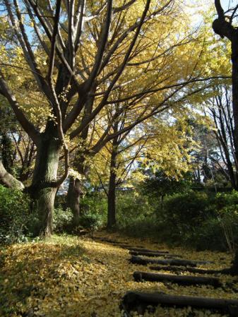 横浜 三ッ池公園の紅葉(4)