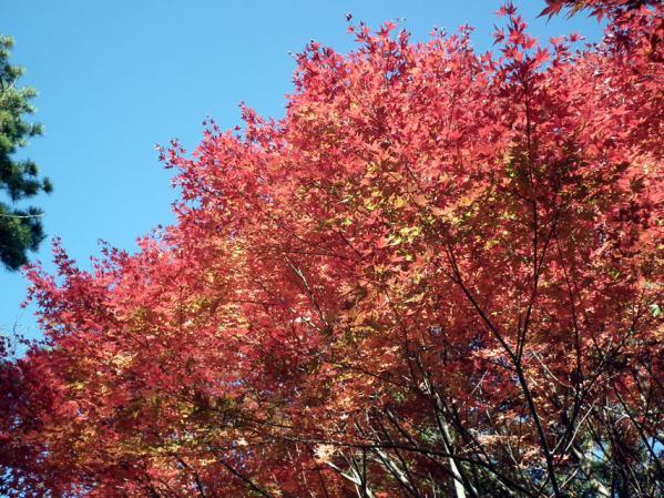 横浜 三ッ池公園の紅葉(5)