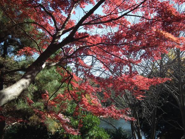 横浜 三ッ池公園の紅葉(6)