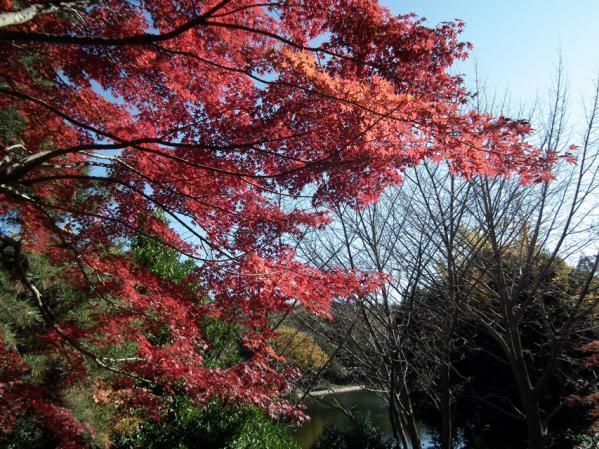 横浜 三ッ池公園の紅葉(7)